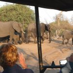 Robyn taking pictures of elephant during a Chobe game drive