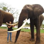 María Cecilia getting to know one of the rescued elephants at The Elephant Cafe, on the Zambian side of the Victoria Falls
